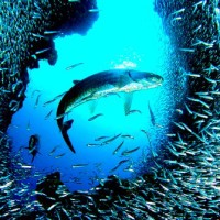Image of What Do Fish Eat