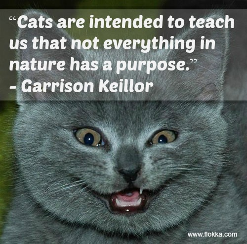 33 Of The Funniest Quotes About Cats