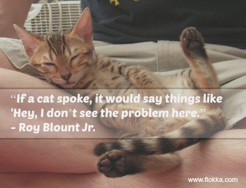 33 Of The Funniest Quotes About Cats Flokka